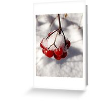 American Cranberries in Snow Greeting Card
