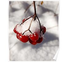 American Cranberries in Snow Poster