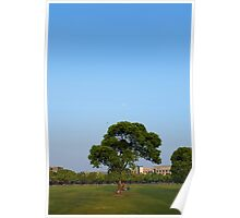 Photo of a tree on the lawn Poster