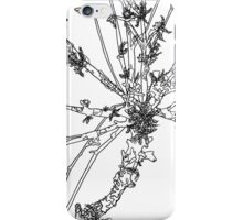 lichen on stick study iPhone Case/Skin