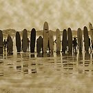 Vintage surfers by helen conibear