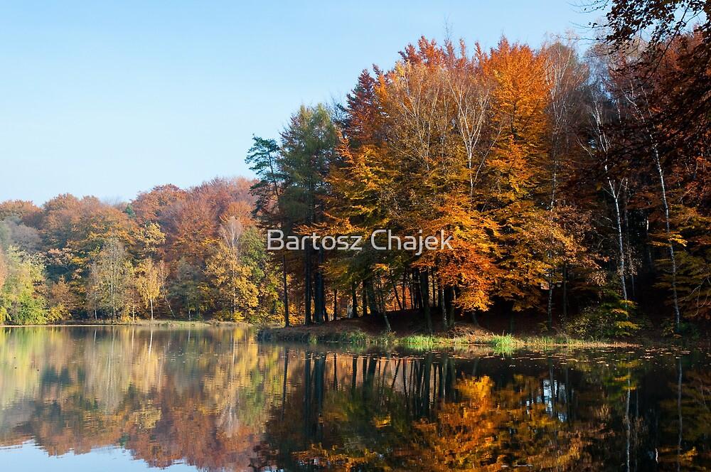 Autumn forest by Bartosz Chajek
