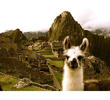 Baby Alpaca at Machu Picchu Photographic Print