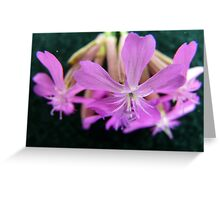 Suspended Beauty Greeting Card