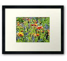 Flowers, Donegal Framed Print