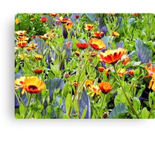 Flowers, Donegal Canvas Print