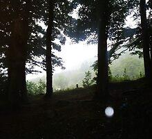 Kilbroney Forest Park, Rostrevor by colettelydon