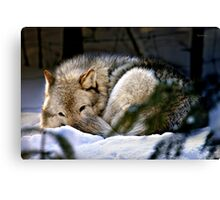 Snuggled Up Canvas Print