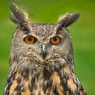 Eagle Eye Owl by Daniel  Parent