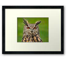 Eagle Eye Owl Framed Print