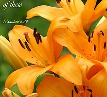 Lilies of the Field (Card) by Tracy Friesen