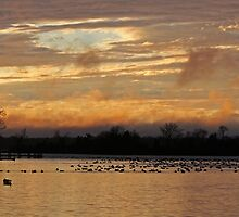 Geese on Their Way Home by Eileen McVey