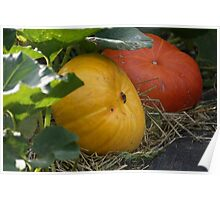Pumkin Patch Poster