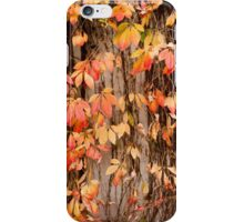 Vitaceae family ivy wall iPhone Case/Skin