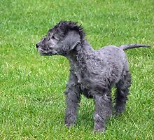 The new puppy by LorrieBee