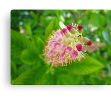 Ruby Spice Canvas Print
