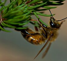 Bee & Native Plant by Birds &  Bees