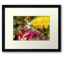 Check Out That Zinnia Framed Print