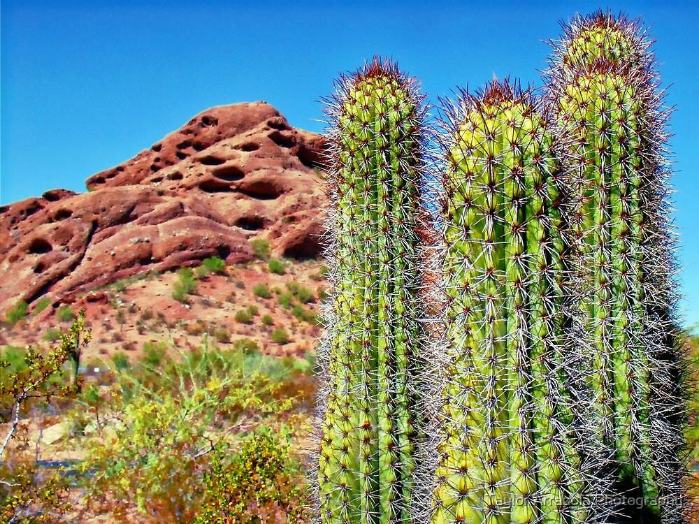 Cactus Red Rock by Taylor Arrazola Photography