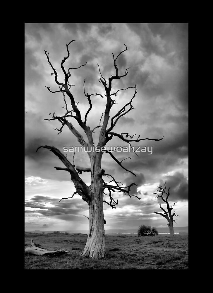 BW Tree by samwisewoahzay