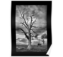 BW Tree Poster