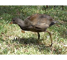 Awesome Moorhen Photographic Print