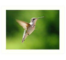 Female Ruby Throated Humming Bird 11 Art Print