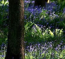 Bluebell Wood by samwisewoahzay