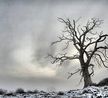 Winter Tree Landscape by samwisewoahzay