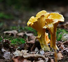 woodland fungi by RPAspey