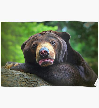 Gummy Bear Poster