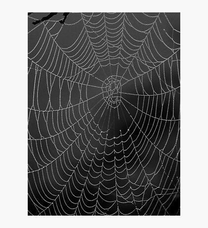 Misty Web Photographic Print