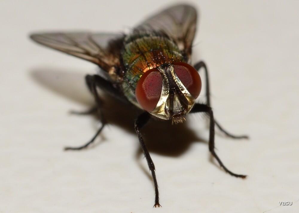 Fly by vasu