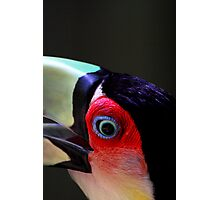 Red Breasted Toucan Portrait #2, at Iguassu, Brazil.  Photographic Print