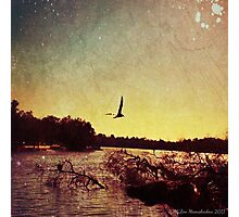 Seagull at Sunset Photographic Print