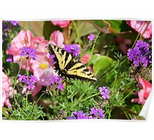 Butchart Butterfly Beauty... Poster