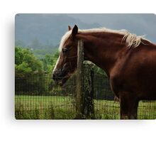 IN MEMORY OF DIANE Canvas Print