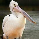 Cute Pelican at San Remo by Maureen Clark