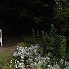 white flowers/3 x white chairs -(120811a)- digital panorama photo by paulramnora