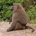 the only gay baboon in the village by gruntpig