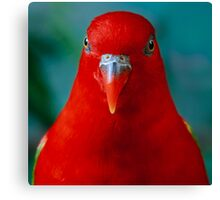 Chattering Lory II Canvas Print