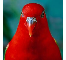 Chattering Lory II Photographic Print
