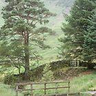 Behind Blea Tarn - the Lake District by monkeyferret