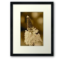 Coffee coloured... Framed Print