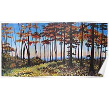 Ontario Afternoon Forest 60x30 Acrylic Poster