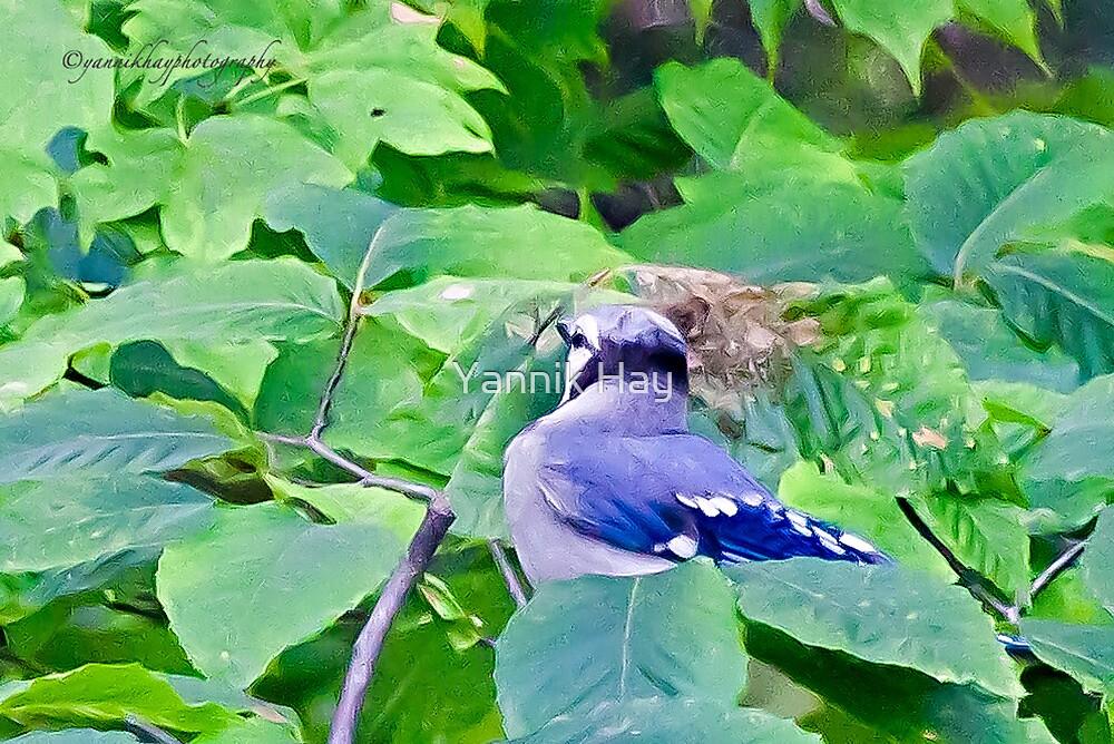 Blue Jay by Yannik Hay