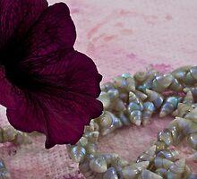 Velvet And Shells by Sandra Foster