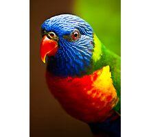 Rainbow Lorikeet V Photographic Print