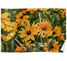 Flowers in HDR Poster