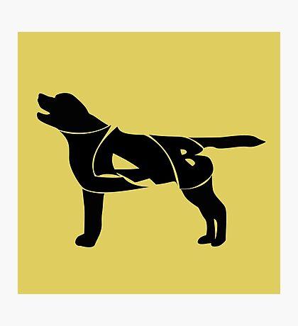 Labrador Golden Retriever Silhuette Photographic Print